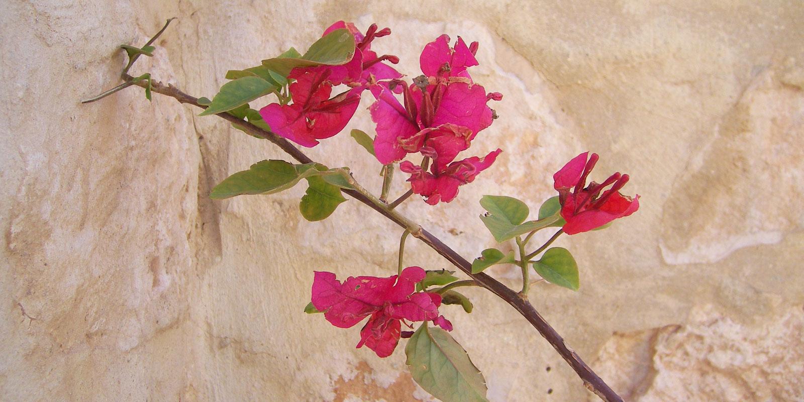 Persien Blume