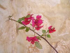 Persien Blume in der Wüste